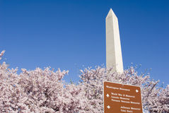 Washington in Spring. Washington Monument in Spring with Cherry Blossoms stock images