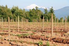 Washington State Berry Acreage Stock Images