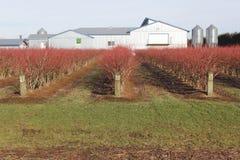 Washington State Berry Farm Stock Photos