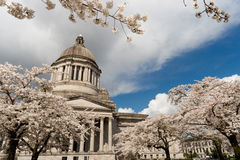 Washington State Capital Building Olympia-de Lente Cherry Blos Royalty-vrije Stock Fotografie