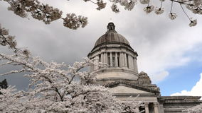 Washington State Capital Building Olympia Springtime Cherry Blossoms stock footage