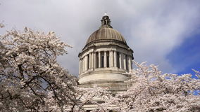 Washington State Capital Building Olympia Springtime Cherry Blossoms stock video footage