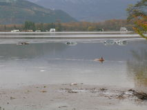 Washington State Flooding. Cars submerged by the floodwaters of the Skagit River in Mount Vernon, Washington state, USA Royalty Free Stock Photography