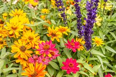 Bright colorful garden plants in summer in washington. Washington state flower garden in summer with colorful bright blooms stock photo