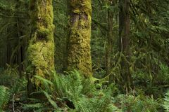 Washington State Rainforest Stock Photography