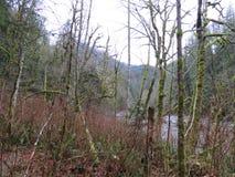 WASHINGTON State Twin Falls Trail, parque de estado de Olallie imagen de archivo libre de regalías