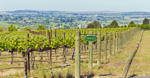 Washington Vineyard im Frühjahr Stockbild