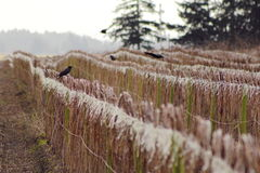 Washington Winter Fruit Crop Royaltyfria Bilder