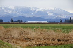 Washington Winter Rural Landscape Foto de archivo