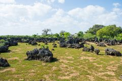 Wasini ö i Kenya royaltyfria bilder