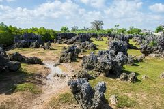 Wasini-Insel in Kenia stockfotos