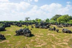 Wasinieiland in Kenia royalty-vrije stock afbeeldingen