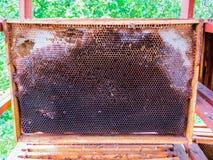 Waskaders na het pompen van honing van hen royalty-vrije stock afbeeldingen