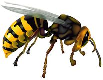 Wasp 03 Stock Photos