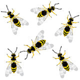 Wasp. Realistic wasp vector, isolated and grouped objects over white background. Ready for print, no mesh or transparency Stock Photo