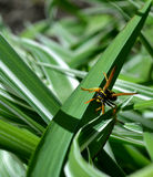 Wasp. Amazing bright wasp lurking in the green foliage. Wasp waiting for your friends Royalty Free Stock Images