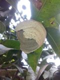 Wasp bikupa Royaltyfri Bild
