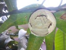 Wasp bikupa Royaltyfria Foton