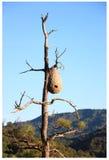 Wasp bikupa Royaltyfri Fotografi