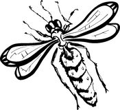 Wasp (black and white) Royalty Free Stock Photography