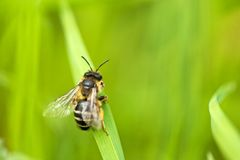 Wasp on blade of grass Stock Images