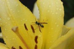 Wasp blomma Arkivbild