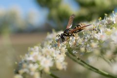 Wasp on blooming plant Stock Photo