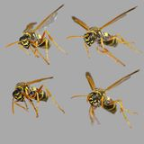 Wasp collection Royalty Free Stock Image