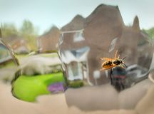 Wasp crawling over distorted glass window pane,inside a family house,England,United Kingdom royalty free stock photo