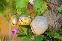 Wasp creative toy Stock Photos