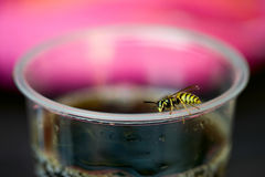 Wasp on the cup Stock Photos