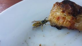 Wasp dinner. Wasp is eating my dinner Stock Photography