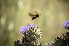 Wasp eating and flying. A little insect flying on the flower Royalty Free Stock Photos