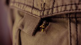 Wasp entering a pocket stock photography