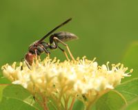 Wasp Flower Stock Photo
