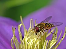 Wasp on  flower Stock Photos
