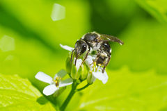 Wasp on the flower Stock Photography