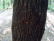 Wasp and fly insects. On a tree in the forest stock video footage