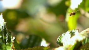 Wasp flying off a bush Royalty Free Stock Photos