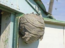 Wasp hive Royalty Free Stock Photo