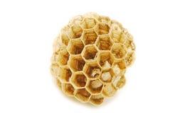 Wasp hive Stock Photos
