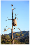Wasp Hive Royalty Free Stock Photography