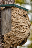 Wasp hive Stock Photography
