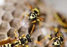 A wasp for hives in nature Stock Photos