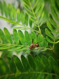 Wasp holding on fern against the strong wind. Macro photography. stock photo