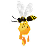 Wasp and honey. Wasp stealing a honeycomb, isolated object over white background Stock Images