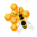 Wasp and honeycomb Stock Images