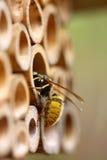 Wasp house Stock Image
