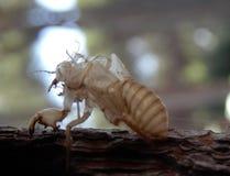 Wasp hud royaltyfria bilder