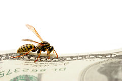 Wasp on hundred dollar bill Royalty Free Stock Photography